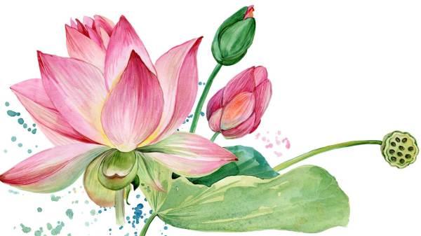 lotus_FB-event-toppbild